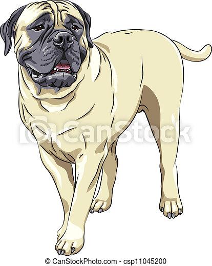 スケッチ, sta, 品種, 国内, bullmastiff, 犬, ベクトル, 肖像画 - csp11045200