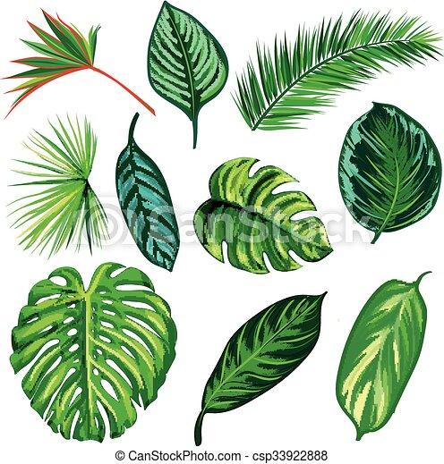 セット, 葉, コレクション, 隔離しなさい, トロピカル, vector. - csp33922888