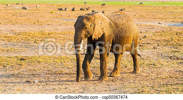 タンザニア, 自然, 象, 生息地, 国民, アフリカ, 公園, tarangire, アフリカ。 - csp50367474