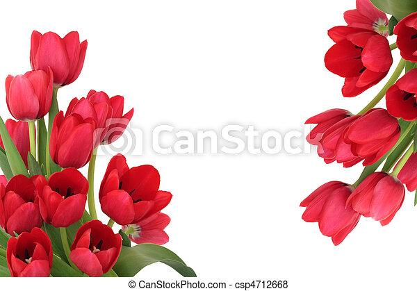 チューリップ, 花, ボーダー, 赤 - csp4712668