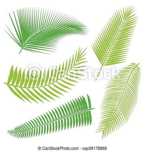 トロピカル, 葉, コレクション, 隔離しなさい, vector. - csp39178869