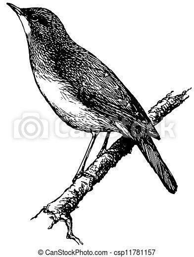 ナイチンゲール, 鳥 - csp11781157