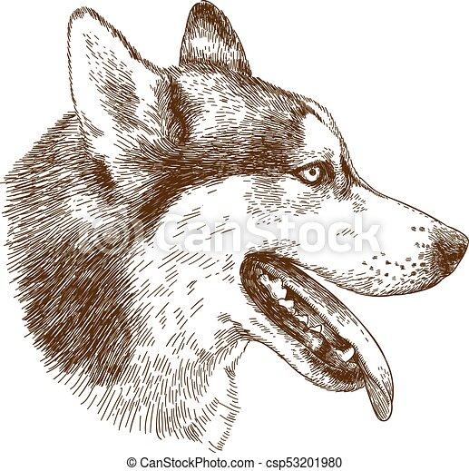 ハスキー 頭 エッチング イラスト 犬 骨董品 彫版 頭 犬
