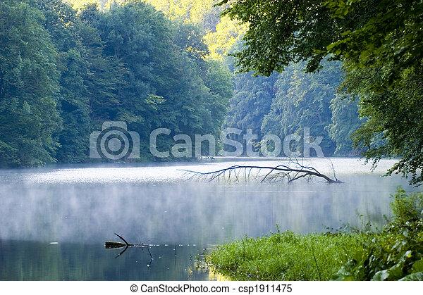ハンガリー, トロピカル, 木, 湖, 穏やかである, 水, 明るい, 屋外で, 植物, 平和, 抽象的, impassable, 景色, 日当たりが良い, 自然, アル中, 日, 背景, 群葉, 霧, 緑, 春, ブランチ, マジック, 自然, 有機体である, 川, 環境, 成長, きれいにしなさい, 日光, 反射, 波, 野生, 新たに, 草, 美しさ, 葉, 滝, 森林, 森, 植物学, 白熱, 美しい, 夏 - csp1911475