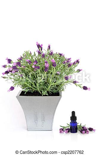ハーブ, 植物, ラベンダー, 本質 - csp2207762