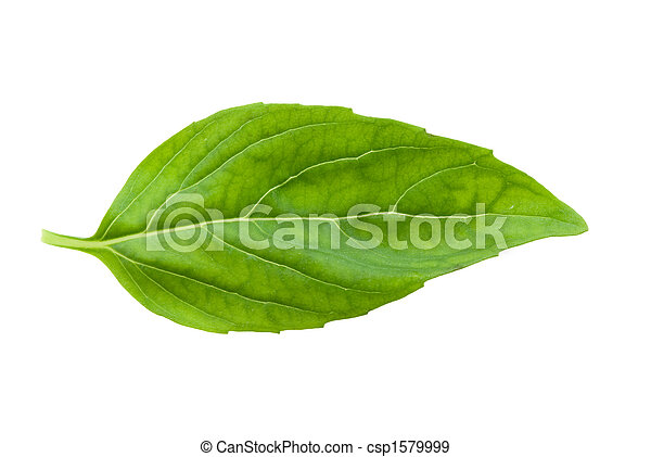 バジル, 新たに, 葉, 隔離された - csp1579999