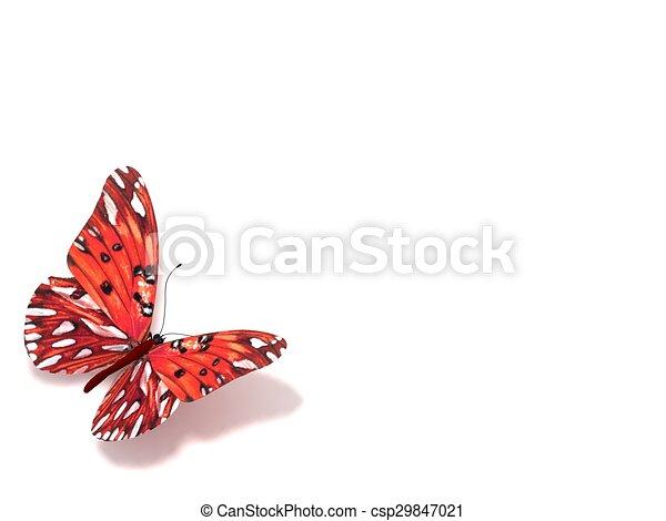 バックグラウンド。, 白, 隔離された, butterfly. - csp29847021