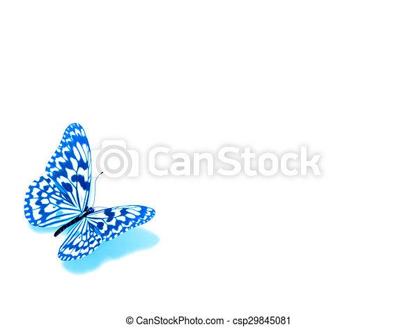 バックグラウンド。, 白, 隔離された, butterfly. - csp29845081