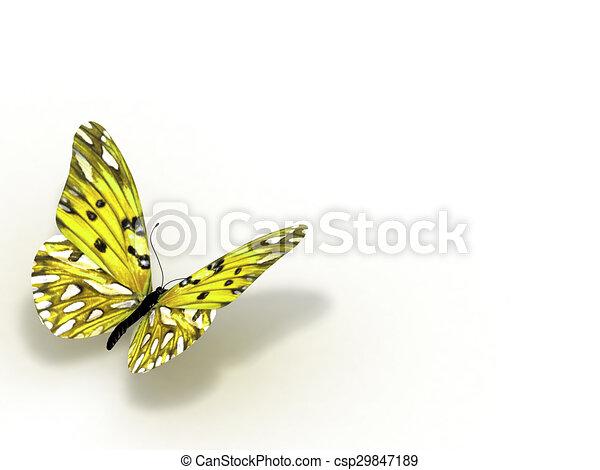 バックグラウンド。, 白, 隔離された, butterfly. - csp29847189