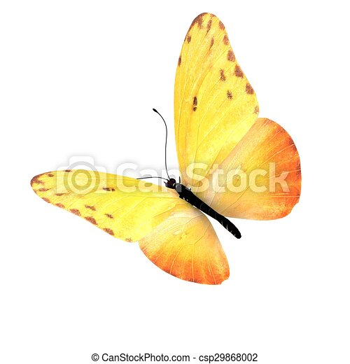 バックグラウンド。, 白, 隔離された, butterfly. - csp29868002