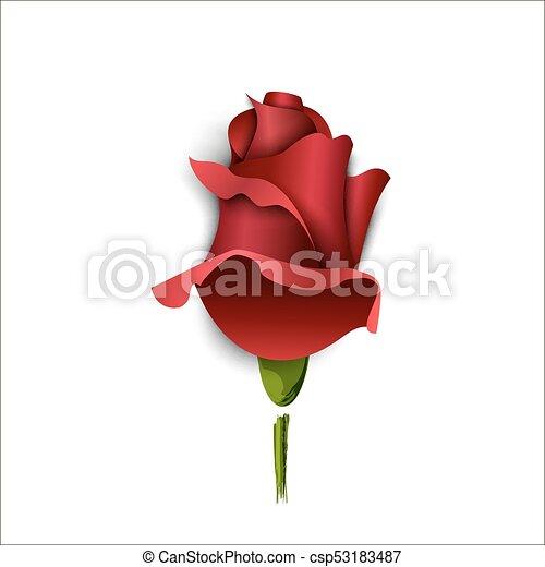 バラ, 挨拶, ブルゴーニュ, バックグラウンド。, ペーパー, 白, カード - csp53183487