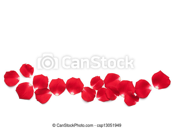 バラ, 赤, 花弁 - csp13051949