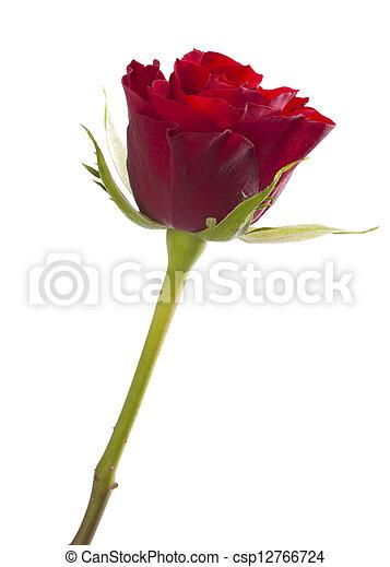 バラ, 隔離された, 赤, 1(人・つ) - csp12766724