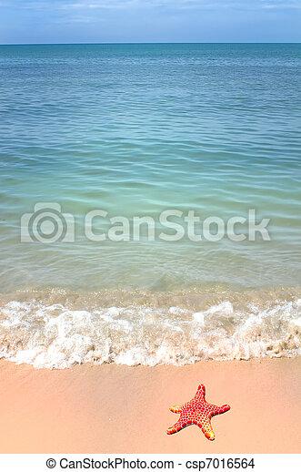 ヒトデ, 海洋, トロピカル, 波, 浜, 砂 - csp7016564