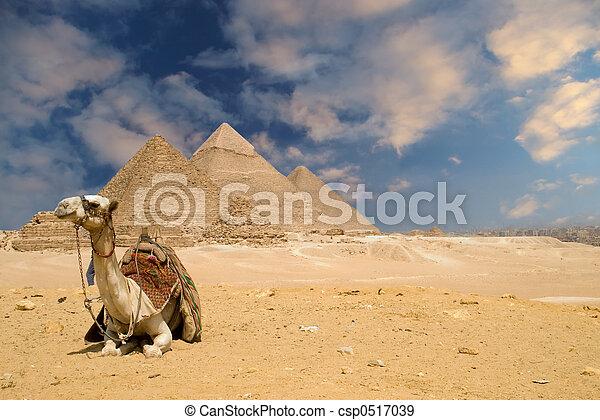 ピラミッド, らくだ - csp0517039