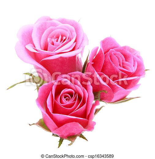 ピンクの花, 花束, バラ, 隔離された, 背景, 白, 切抜き - csp16343589