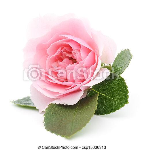 ピンクは 上がった - csp15036313