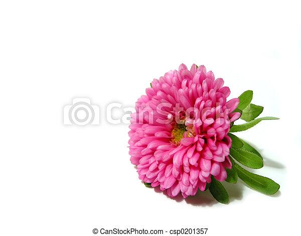 ピンク, 白い花, 背景 - csp0201357