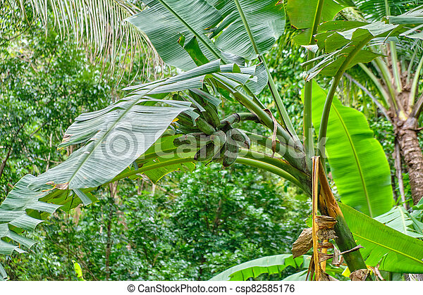 フィリピン。, 島, 野生, panay, 森林 - csp82585176
