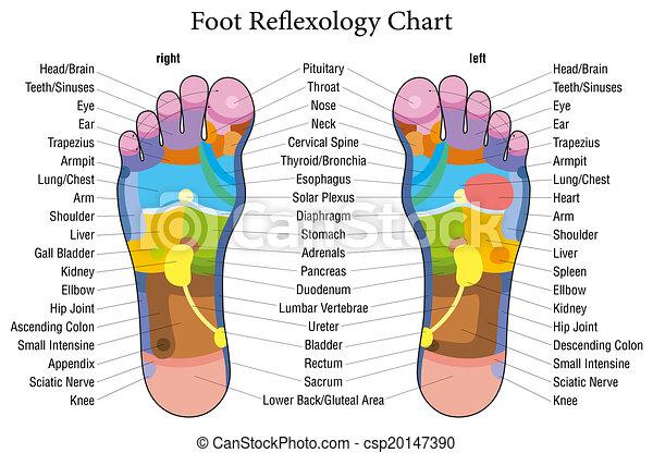 フィート, reflexology, チャート, 記述 - csp20147390