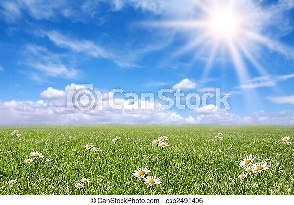 フィールド, 春, 日当たりが良い, 落ち着いた, 牧草地 - csp2491406