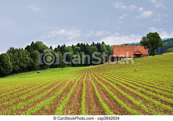 フィールド, 農業 - csp3842634