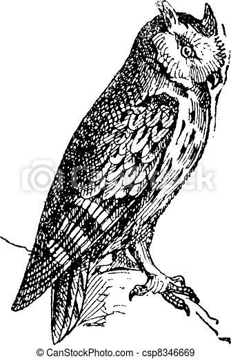 フクロウ, 型, scops, とまった, ブランチ, engraving. - csp8346669