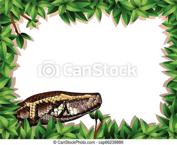 フレーム, ヘビ, 自然 - csp66239886