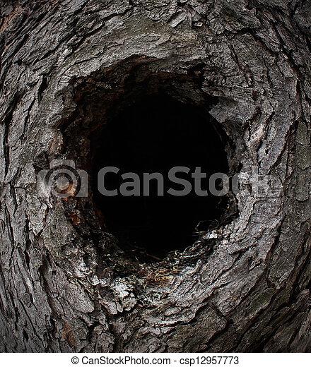 フレーム, 木, 自然 - csp12957773