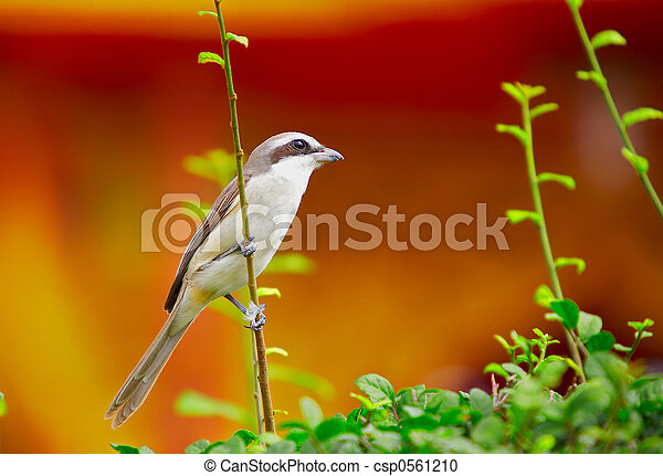 ブッシュ, 43-, 鳥 - csp0561210