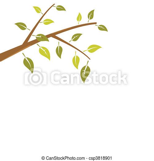 ブランチ, 抽象的, 木, 隔離された, 背景, 白 - csp3818901