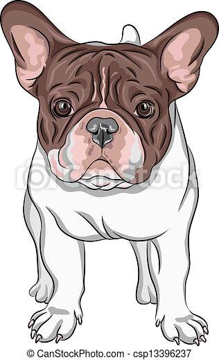ブルドッグ, 品種, ベクトル, スケッチ, 国内 犬, フランス語 - csp13396237