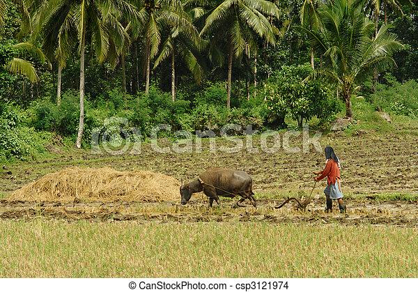 プリミティブ, 農業, アジア人 - csp3121974