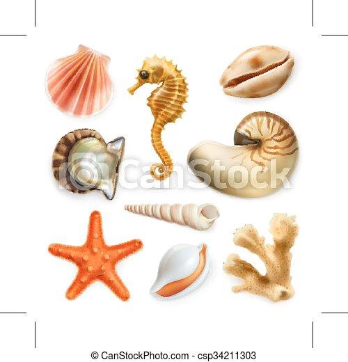 ベクトル, セット, 貝殻, アイコン - csp34211303