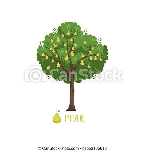 ベクトル 庭 西洋ナシの木 イラスト フルーツ 名前 ベクトル 庭