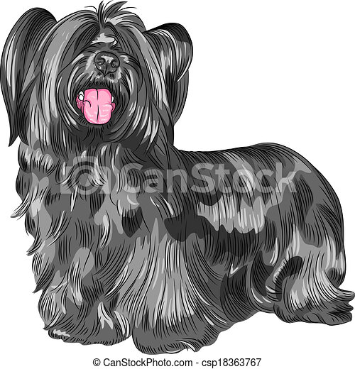 ベクトル, 犬, Skye, 品種, テリア