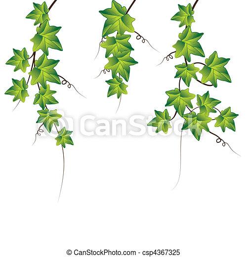 ベクトル, 緑, ツタ, イラスト - csp4367325