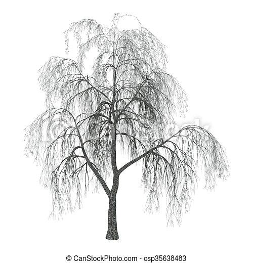 ヤナギ 白 イラスト 3d Osier 枝垂れ柳 隔離された イラスト
