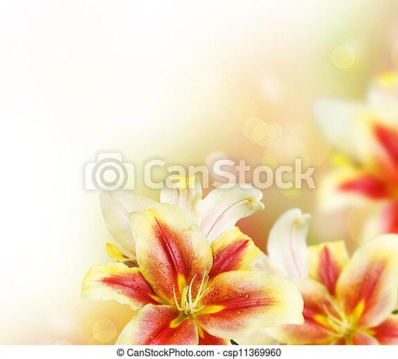 ユリ, 花, 夏, ボーダー, design. - csp11369960