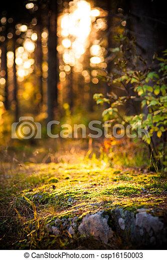 ライト, 森林, 芸術的 - csp16150003