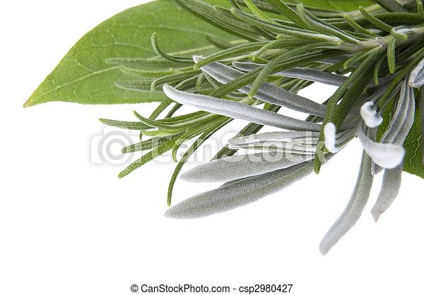 ラベンダー, 湾, herbs., 新たに, 葉, ローズマリー - csp2980427