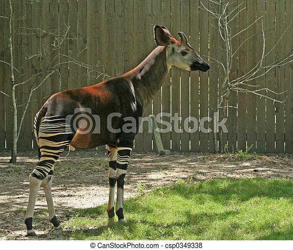 一种動物 - csp0349338