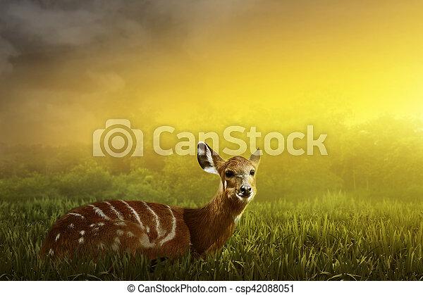 中, 鹿, 見なさい, 女性, ジャングル - csp42088051
