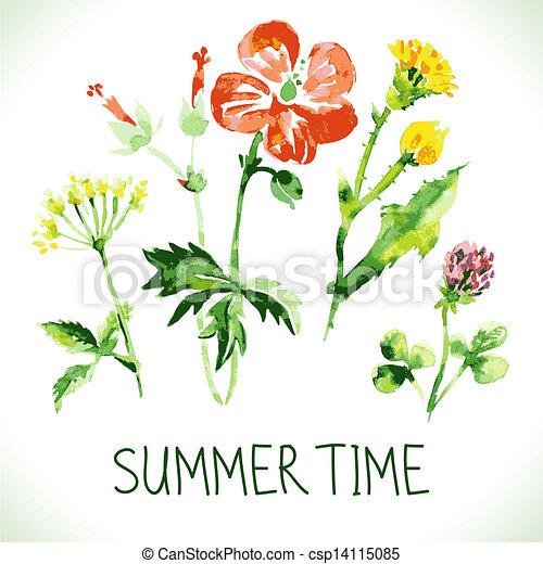 主題, レトロ, card., 背景, 夏, 花, 挨拶, 水彩画, wildflowers., 型 - csp14115085