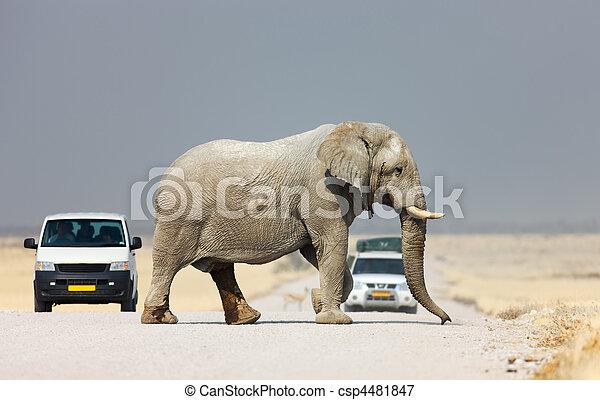 交差, 道, 象 - csp4481847