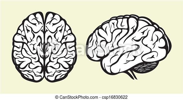 人間の頭脳 - csp16830622