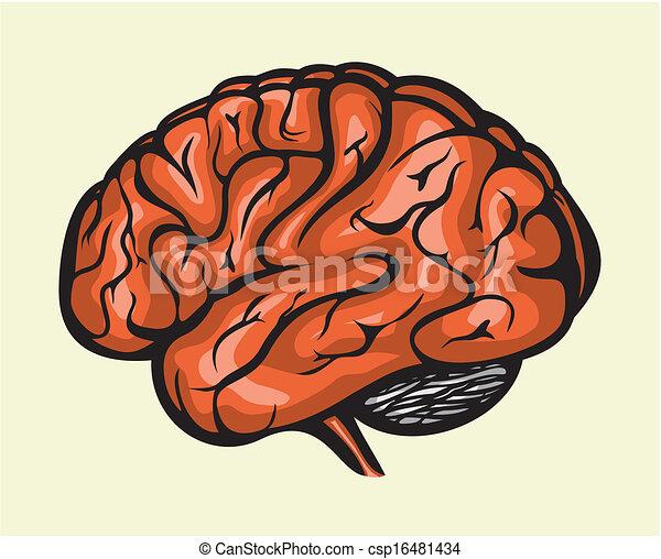 人間の頭脳 - csp16481434