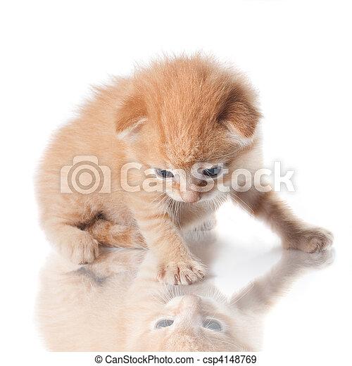 他的, 反映, 隔离, 看, 小猫, 白色 - csp4148769
