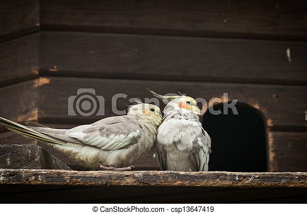 会話, 2羽の鳥 - csp13647419