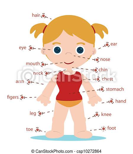 体, 女の子, 部分 - csp10272864